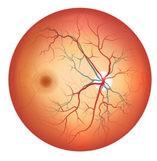 Retina Division